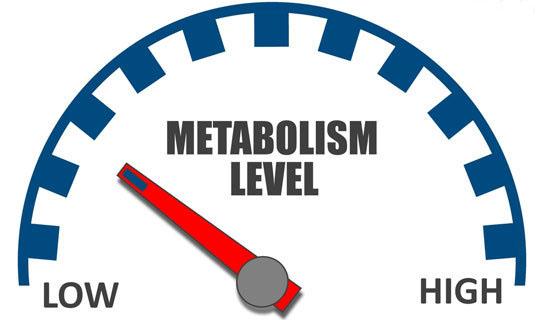 چگونه بدون اینکه ورزش کنیم سوخت ساز بدنمان را بالا ببریم؟