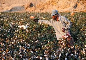 از ادای دین دهلرانیها به محیط زیست تاطلای سفید ایرانی در آستانه نابودی + فیلم