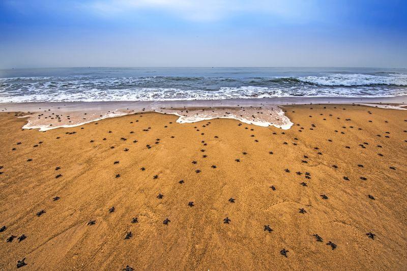 عکس روز نشنال از ساحل دریا