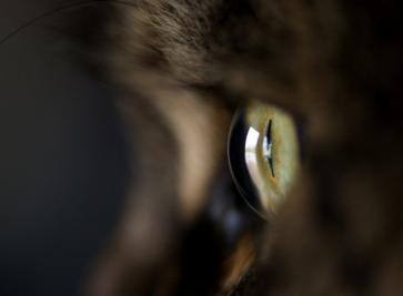 گربه نفرینشده سیاه که شباهت عجیبی به انسان دارد!+فیلم