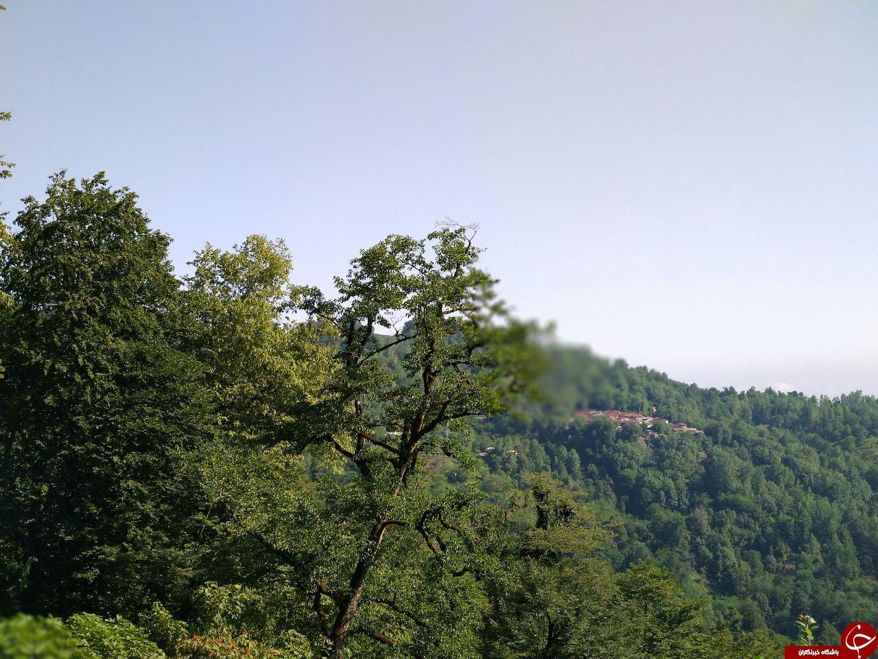 تصویرهایی از طبیعت جذاب در روستای تابستان نشین