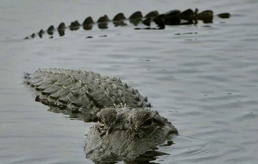 مردی که بدون هیچ ترسی سوار تمساح عظیم الجثه شد! +فیلم