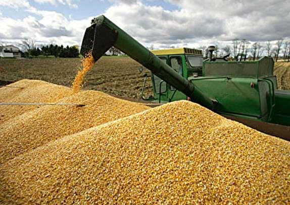تاکنون 29 هزار تن گندم از کشاورزان زنجانی خریداری شده است