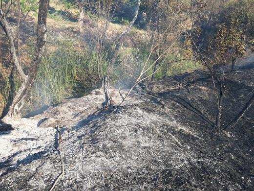 آتش سوزی در باغات میوه غرق آباد ساوه +عکس