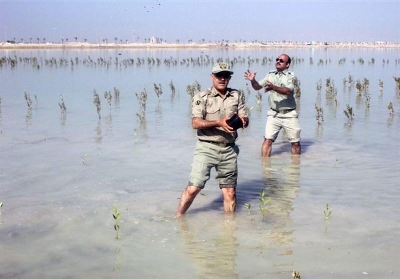 کاشت نهال حرا در ۳۰۰ هکتار اراضی ساحلی بندر دیر