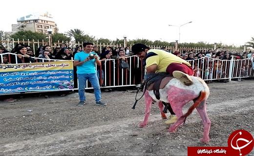 برگزاری مسابقه تپلهای بافقی با الاغهای رنگی