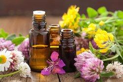 برنامه ریزی برای تدوین برنامه اجرایی سند توسعه گیاهان دارویی