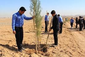کاشت نهال در ۴۰۰ هکتار از طبیعت خراسان جنوبی