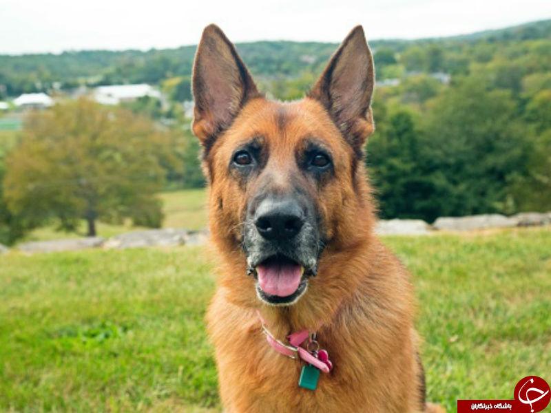 چرا سگ نجس است؟ +بررسی نجاست سگ از دیدگاه اسلام و قرآن