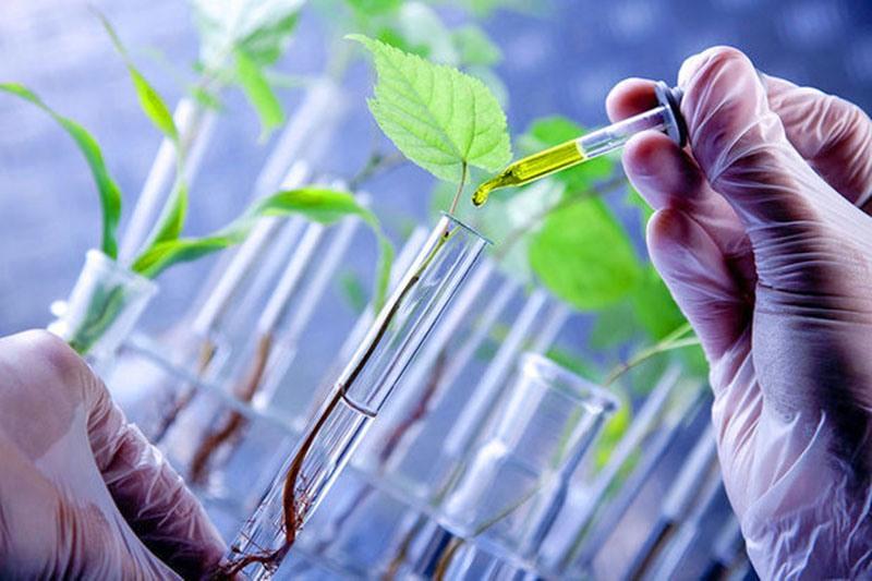 سالانه ۱۵۰ یافته در سازمان تحقیقات کشاورزی عرضه میشود