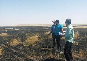 آتش سوزی در 70 هکتار از مزارع گندم مراغه