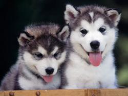 فروش سگهاى تزئینی همراه با پاسپورت و شناسنامه در نمایشگاه بینالمللی/از سگ نگهبان ٥٠٠ میلیونی تا توله با خدمات جانبى!