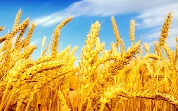 باشگاه خبرنگاران - افزایش ۲۵ درصدی تولید محصولات دامی و زراعی در آذربایجان شرقی