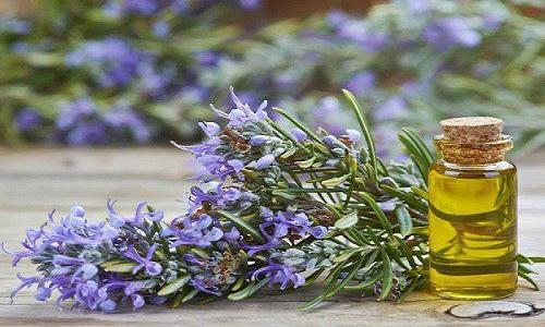 کاهش فوری استرس با گیاهی آرامبخش و فوق العاده خوشبو