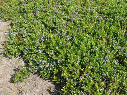 ثروتی که به تاراج می رود/ وقتی صنعت گیاهان دارویی در استان اردبیل مغفول می ماند