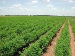 برگزاری هفتمین کنگره ترویج کشاورزی و منابع طبیعی
