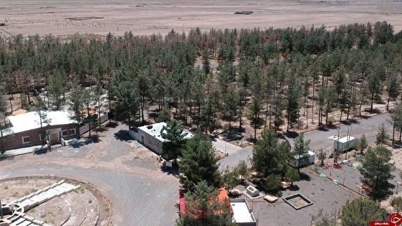 باشگاه خبرنگاران - تنها تفرجگاه مردم تربت جام در یک قدمی نابودی/۸۵۰ اصله درخت براثر تنش آبی خشک شد
