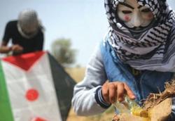 جدال پهپاد پیشرفته صهیونیستی با چند بادبادک ساده فلسطینی! +فیلم