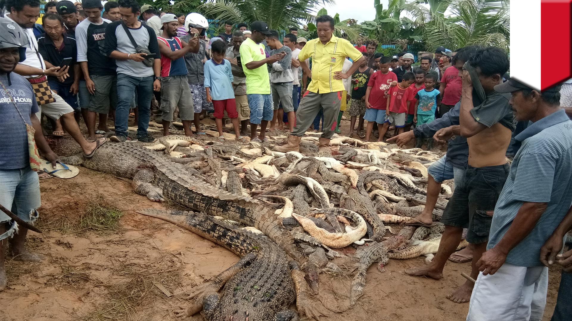قتل و عام کروکودیل ها توسط بومیان خشمگین + فیلم//