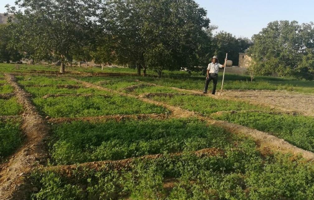 یوروهای ۱۸ هزار گردشگرخارجی در جیب یک روستایی بیسواد+فیلم
