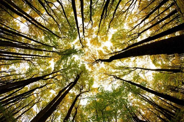 21 تصویر که شما را عاشق طبیعت خواهد کرد