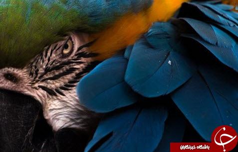 عکسی متفاوت از پرنده ماکائو