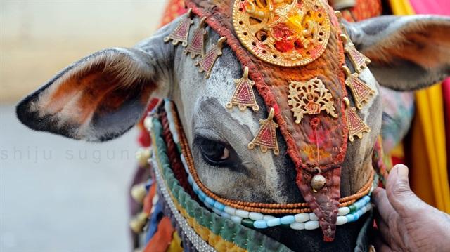 قتل یک مسلمان به دست هندوهای گاوپرست