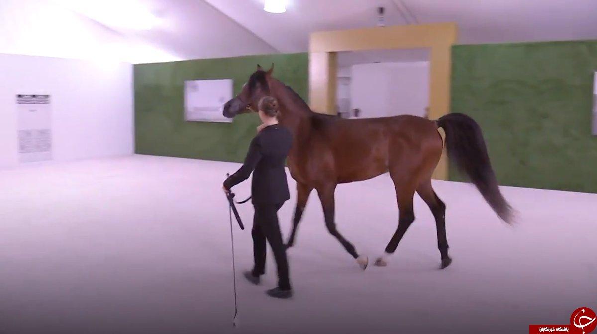 شی جین پینگ در امارات یک اسب اصیل عربی هدیه گرفت+ تصاویر