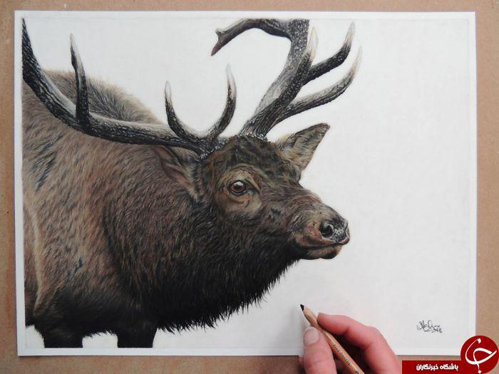 نقاشی های زیبا با مداد نقاشی زیبا عکس شگفت انگیز زیباترین نقاشی بهترین نقاش