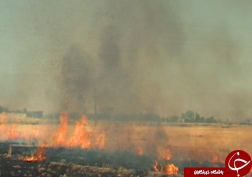 آتش سوزی کاه و کلش مزارع در لرستان / با متخلفین برخورد قانونی میشود + تصاویر