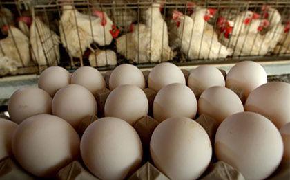 نرخ جدید مرغ و انواع مشتقات در بازار/قیمت هر کیلو مرغ 7100 تومان