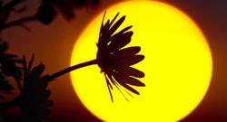 موجودی که میتواند تا پس از مرگ خورشید نیز زنده بماند!+عکس