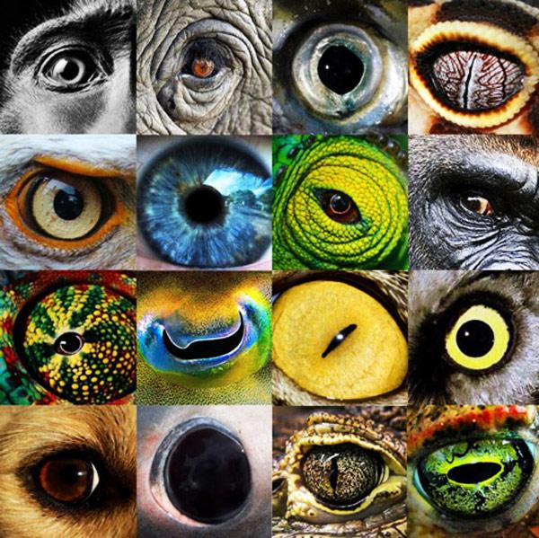 چشم حیوانات مختلف از نمای نزدیک
