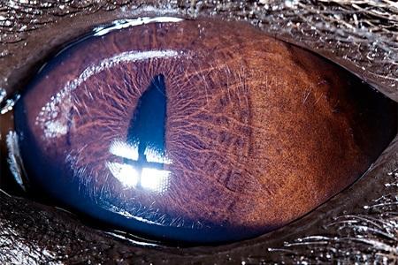تفاوتهای حیرتآور چشمان حیوانات در نزدیکترین نما+تصاویر