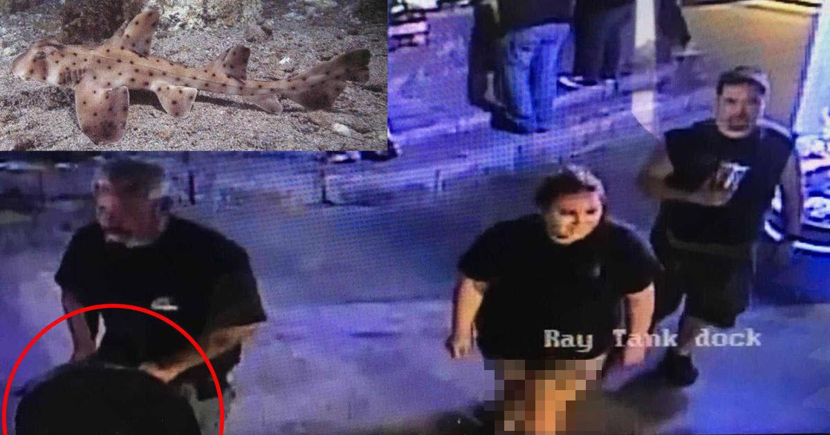 لحظه دزدیدن یک کوسه از آکواریومی در آمریکا! +فیلم