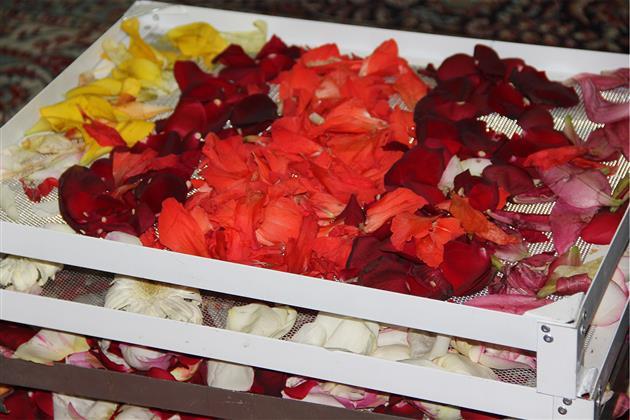 گلهایی که خادمان حریم رضوی هستند/گلهایی متبرک که حاجت را روا و نمک گیر این آستان می کنند