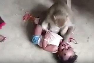 لحظه تلاش میمون برای ربودن کودک +فیلم