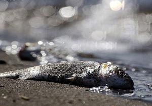 مرگ غمانگیز ماهیان در هور بستان + فیلم