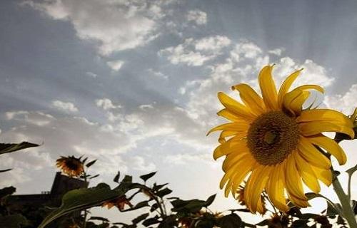 دانههایی قهوهای که به کمک قلب میآیند/وسیلهای سخت و پرفایده/با رعایت این موارد سلامتی را به خود هدیه دهید/فواید این گل عاشق را دقیقتر بخوانیم