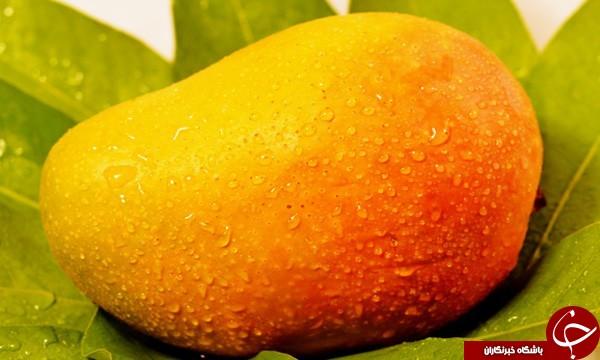 از تاریخچه میوه ای خوش طعم به نام انبه چه می دانید؟!/ تاریخچه ای از انبه که هیچگاه نشنیده اید!