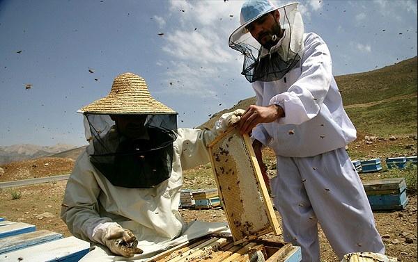 پیش بینی برداشت بیش از 700 عسل در استان ایلام
