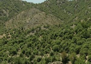 تمامی جنگلهای ایران تحت پوشش کاداستر قرار میگیرد