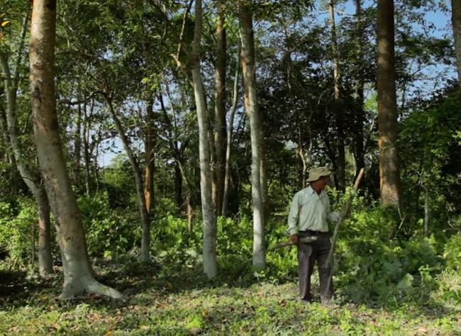 مردی که به تنهایی یک جنگل ساخته است!