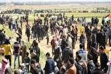 باشگاه خبرنگاران -شهادت ۱۷۳ فلسطینی از آغاز تظاهرات بازگشت