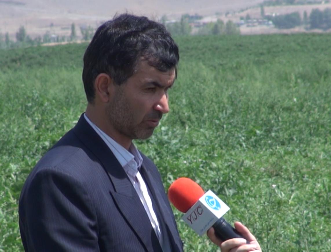 ایران رتبه سوم تولید هندوانه در جهان دارد