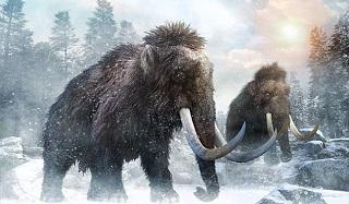گونهای جدیدی از ماموت در سیبری کشف شد +عکس ////