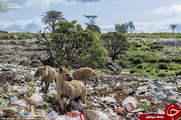 غول پلاستیکی زبالههای رها شده در اقیانوس را میبلعد