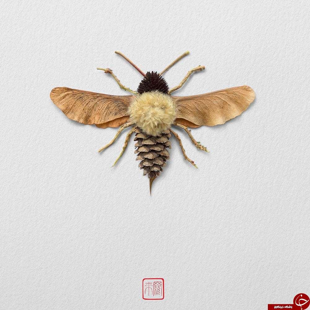 حشراتی که از جنس گیاه هستند