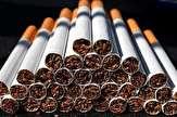 باشگاه خبرنگاران -21 هزار نخ سیگار قاچاق در سنقروکلیایی کشف شد
