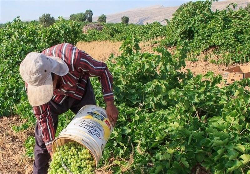 آغاز یک فعالیت اقتصادی جدید در یاسوج/ اشتغال زایی با طعم ترش تولیدات داخلی